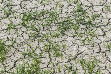 Desolate Barren Dry Cracked Soil With Patches Of Grass
