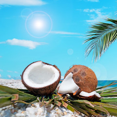 palm and coconuts under the sun