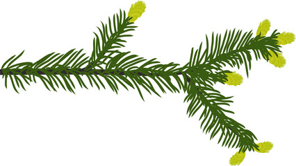 green fir branch illustration