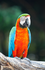 Parrot sitting on a tree