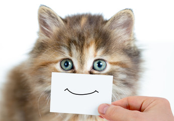 Papier Peint - funny kitten portrait with smile on card