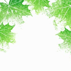 Green leaves background. Eco design template. Maple leaves.