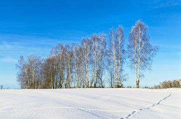 Wall Mural - Russian landscape. Sunny day in winter