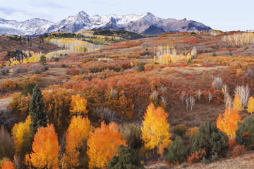 Fototapete - Dallas Divide, Uncompahgre National Forest, Colorado