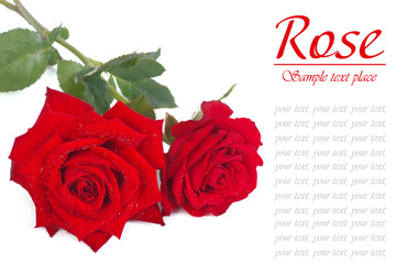 A bouquet of red roses with dew drops isolated on white