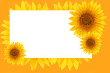 card sunflower frame flower backgrounds