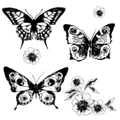 butterfly,butterflies vector