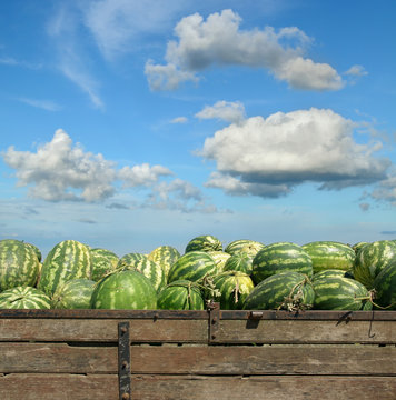 Heap of watermelon at farmers market over  blue sky