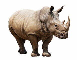 Poster de jardin Rhino rhino on white background