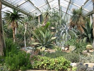 Cerca immagini piante grasse - Giardino tropicale ...