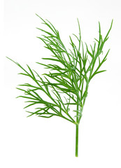 green dill isolated