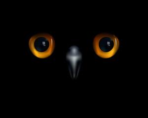 Fotobehang - Baby owl. Yellow eyes and beak on black background.