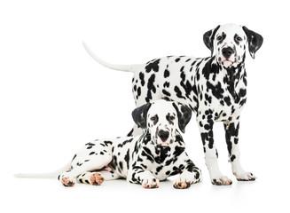 Papier Peint - Two Dalmatian dogs together