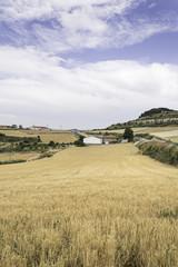 Landscape with corn