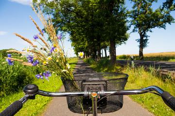 cycling in cornfield