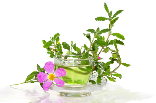 Infusion from the Rockrose or Cistus albidus