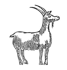 vector goat farm animal with cartoon illustration of a pencil