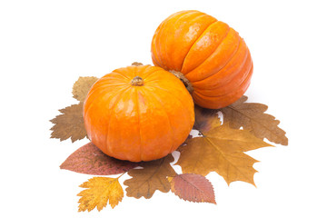 two orange pumpkin on autumn leaves isolated