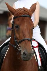 Портрет спортивной лошади