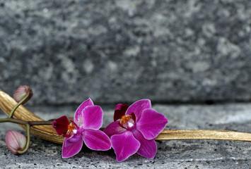 Orchideenblüte in einer Palmblattschale