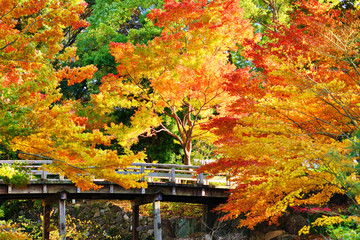 Fall Foliage in Nagoya, Japan