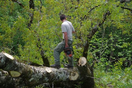 bucheron - abattage d'arbre