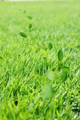 芝生と舞い散る若葉