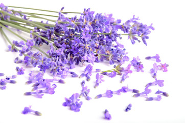 Fototapete - Bunch of lavender