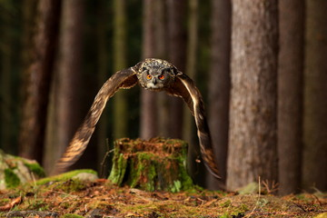 Fotobehang - Owl