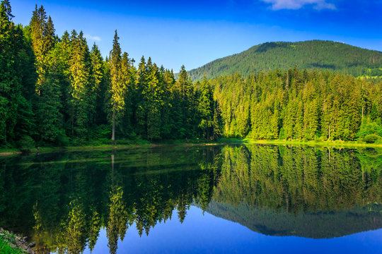 freshness near forest lake in mountains. beautiful summer scenery of synevyr national park