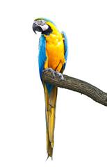 Foto op Aluminium Papegaai tropical ara