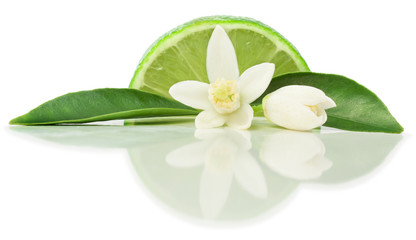 Wall Mural - Lime and blossom