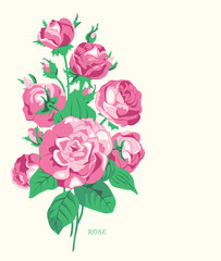 Bouquet from pink roses. Background