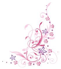 Blume, Blüte, Ranke, Sommer, lila, pink, violett