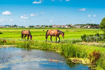 Keuken foto achterwand Lime groen Horses on a bank