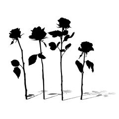 roses silhouettes