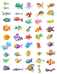 Group of different fishes
