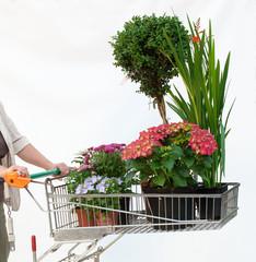 Einkaufswagen mit Pflanzen