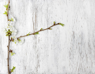 Apple blossom on wooden background. Copy space.