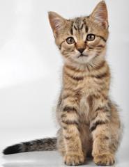 little kitten looking