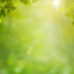 Summer in the forest, abstract natural backgrounds with fresh fo