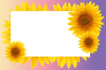 card sunflower frame flower backgrounds sunset