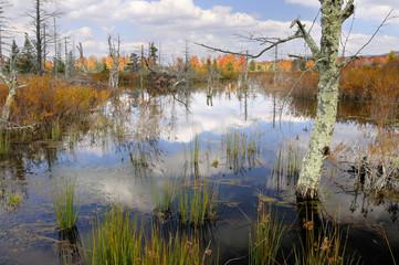 Wall Mural - Mountain Wetlands in Autumn