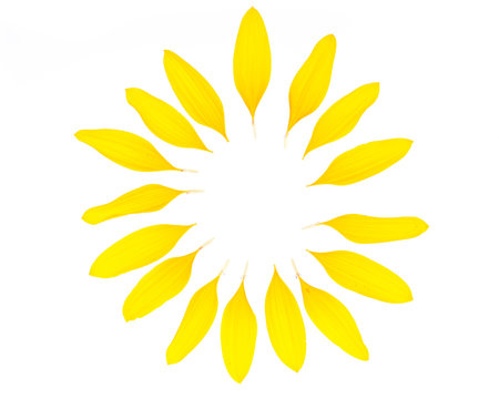 Ein Kreis aus Sonnenblumenblütenblättern