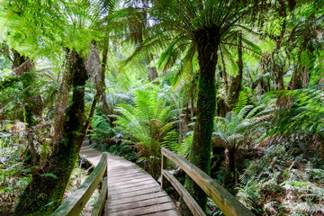 Walking path in tropical rain forest