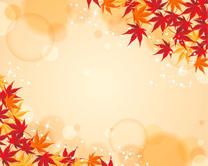 Autumnal leaf maple background