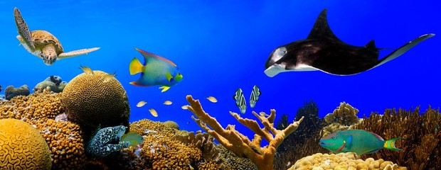 Underwater tropical reef panorama