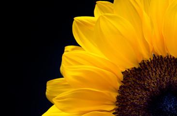 Słonecznik (2)