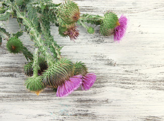 Thistle flowers on wooden background