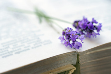 Open book with blue lavender